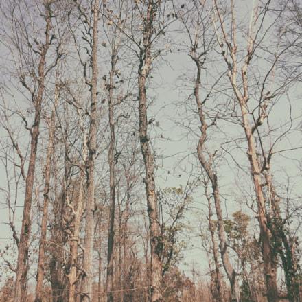 Dead Trees, Canon IXUS 240 HS