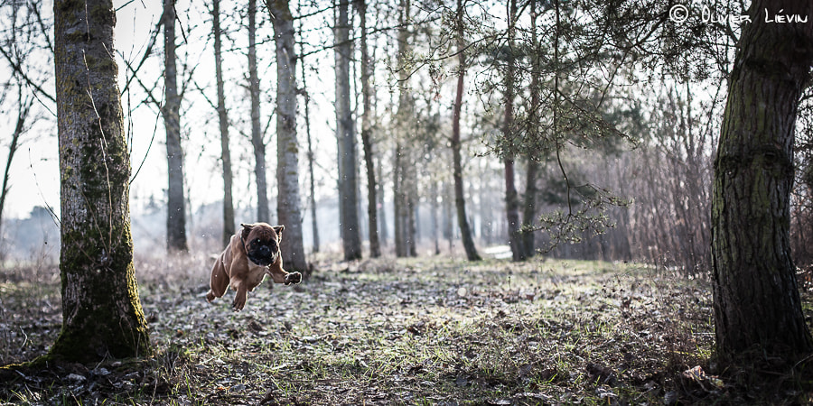 Photograph Flying Boxer by Olivier Liévin on 500px