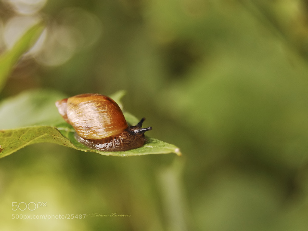 Photograph a snail by Tanya Kartseva on 500px