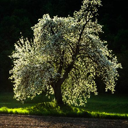 light on tree, Sony DSC-T70