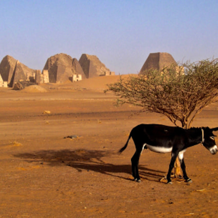 Donkey, Nikon E4300