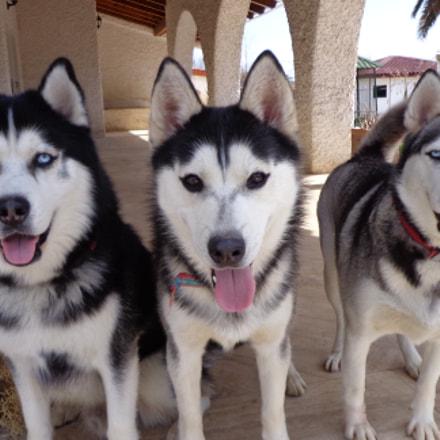 My Dogs2, Sony DSC-W630