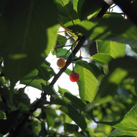 fruit, Sony ILCE-5100, Sony E 18-50mm F4-5.6