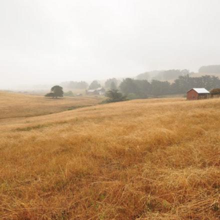 Field near Bodega Bay, Nikon D90, Sigma 10-20mm F4-5.6 EX DC HSM