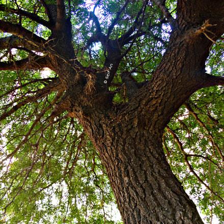 Tree, Sony DSC-W570