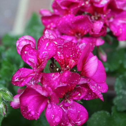 Morning Dew, Canon EOS REBEL T5, Canon EF-S 18-55mm f/3.5-5.6 IS II