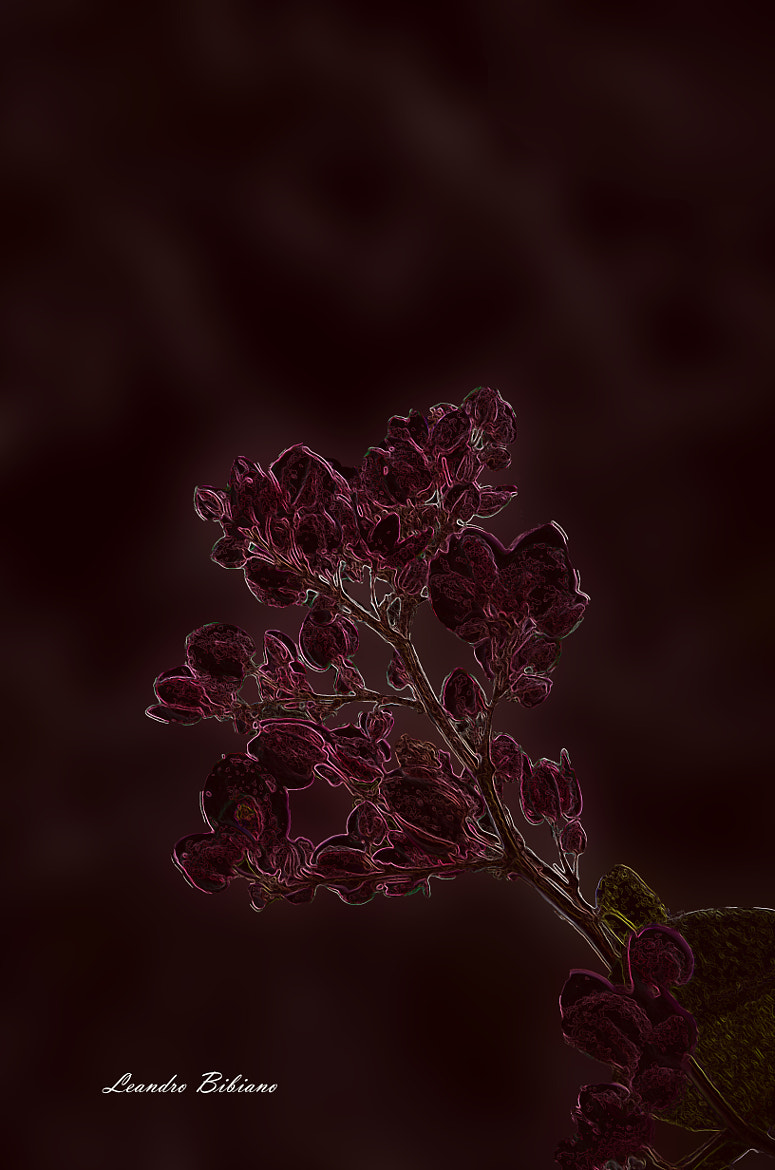 Photograph Flores + Glowings Edges + Sumi-e by Leandro Bibiano on 500px