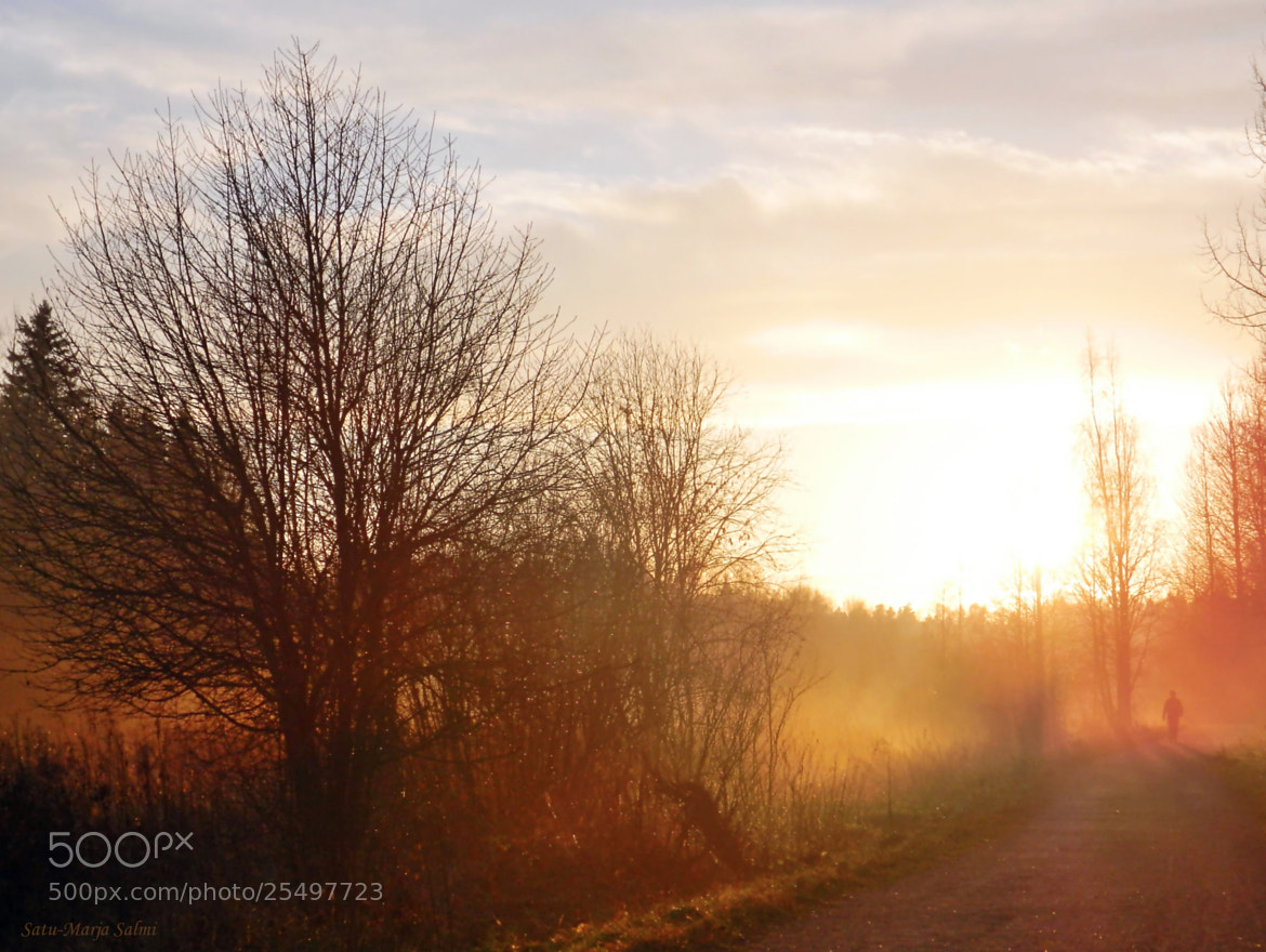 Photograph Evening path by Satu-Marja Salmi on 500px