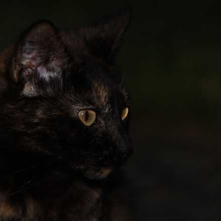 Aria, Canon EOS 60D, Canon EF 70-300mm f/4-5.6 IS USM