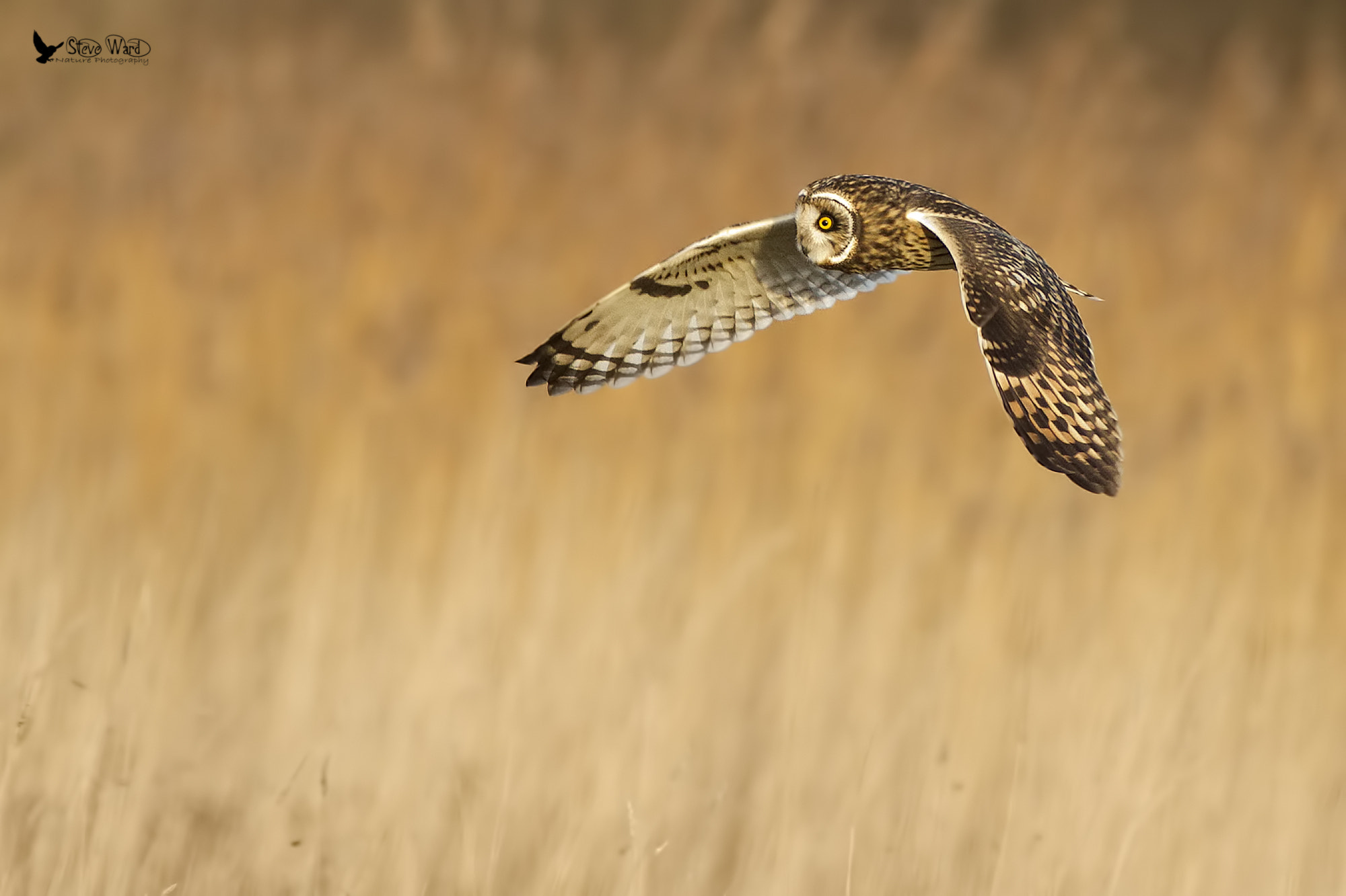 Photograph Combing the grasses by Steven Ward  on 500px