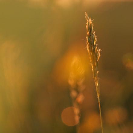 The last light, Canon EOS 400D DIGITAL, Sigma APO Macro 150mm f/2.8 EX DG HSM
