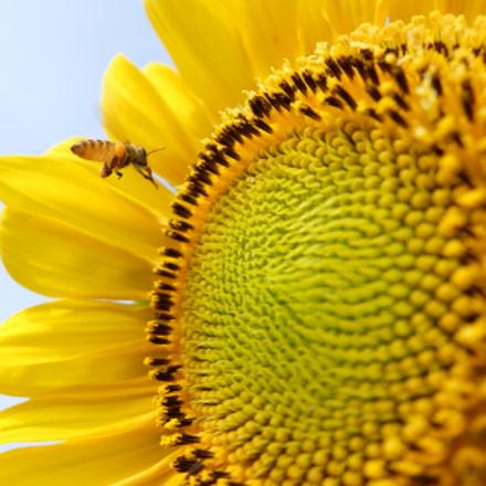 Little bee, Fujifilm XQ2