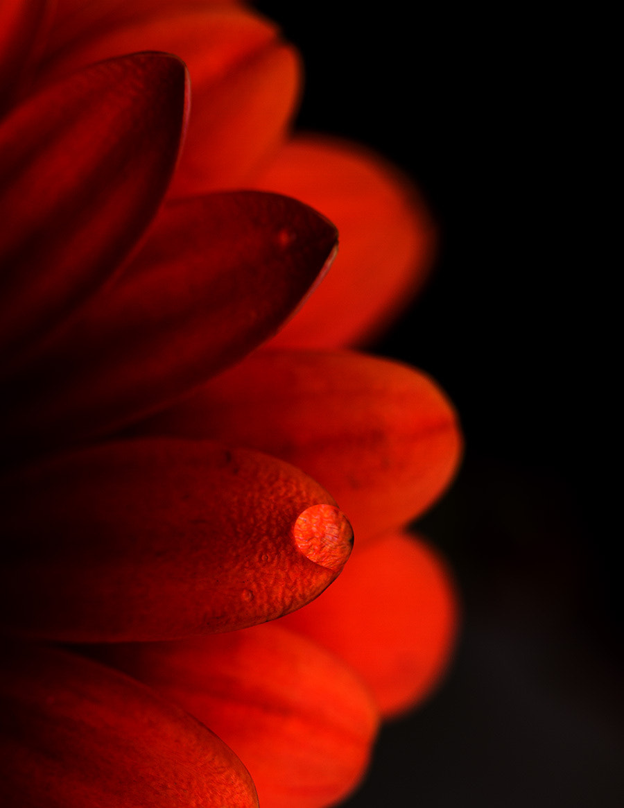 Photograph To catch a drop by Rachna Kayastha on 500px