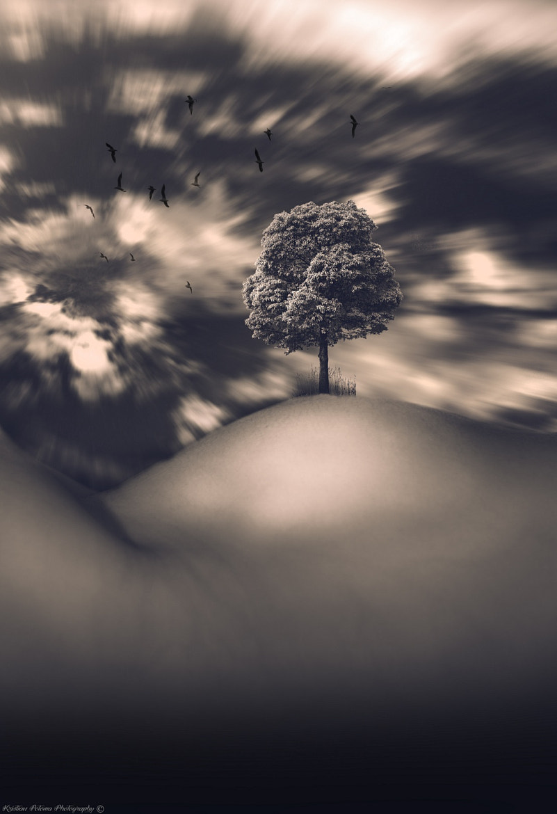 Photograph Tree of life by Kristian Potoma on 500px