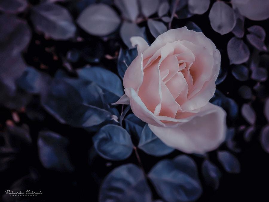 Mundo de fantasía de Roberto Cabral │Image & Photography en 500px.com