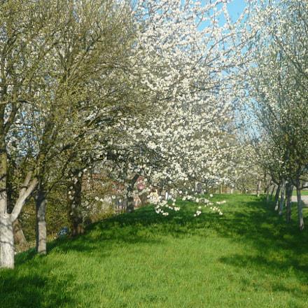 Spring image, Panasonic DMC-LS80