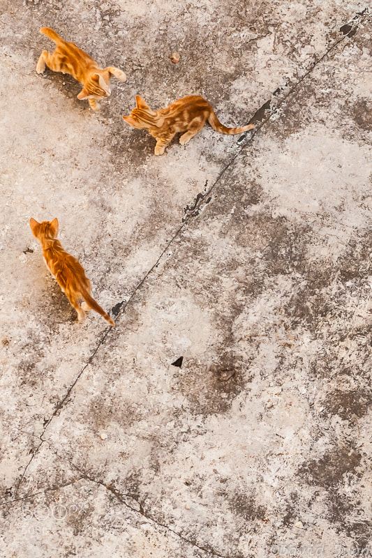 Photograph Cat fight by David Juan on 500px
