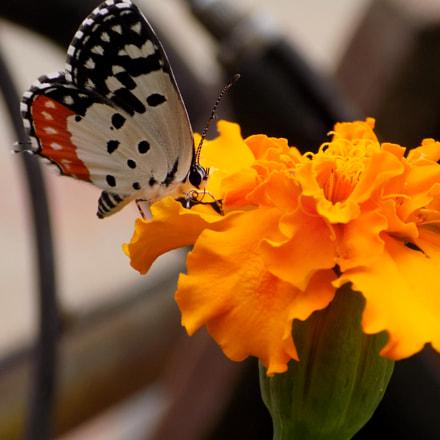 Beauty!!, Nikon COOLPIX L330