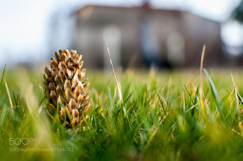 Photograph Urban pinecone by Yane Naumoski on 500px