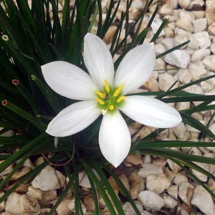 Fleur, Sony DSC-W530
