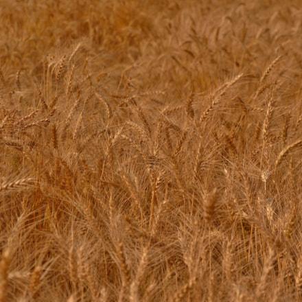 Farmers Gold, Nikon D3200, AF-S DX VR Zoom-Nikkor 18-105mm f/3.5-5.6G ED