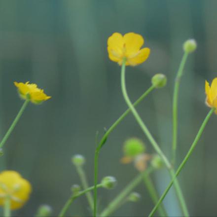 Untitled, Nikon D3200, AF-S DX VR Zoom-Nikkor 55-200mm f/4-5.6G IF-ED