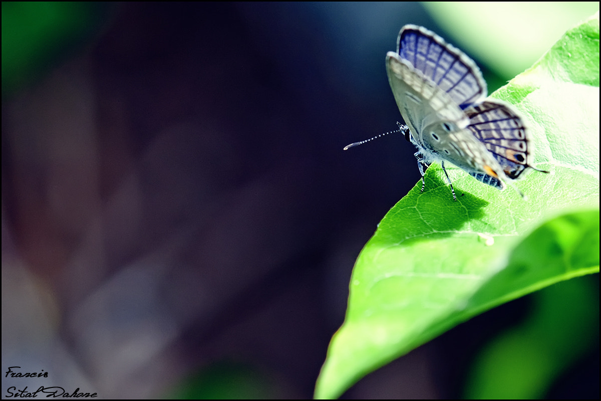 Photograph Butterfly by Francis Sital Dahone on 500px