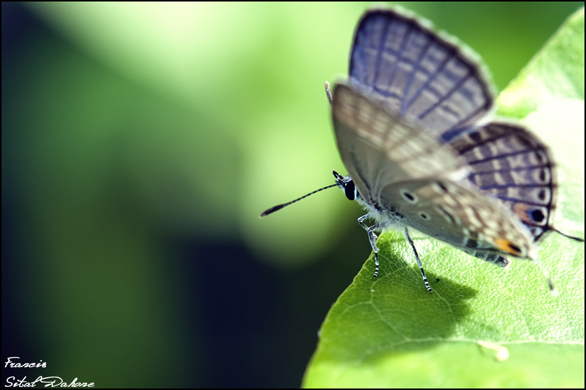 Photograph Butterflies by Francis Sital Dahone on 500px