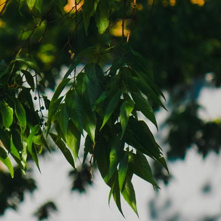 Spring, Nikon COOLPIX L320