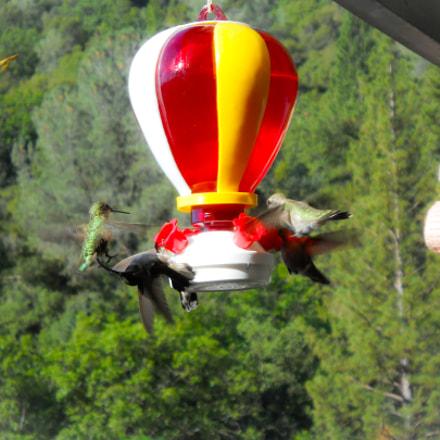 Hummingbirds, Nikon COOLPIX L24