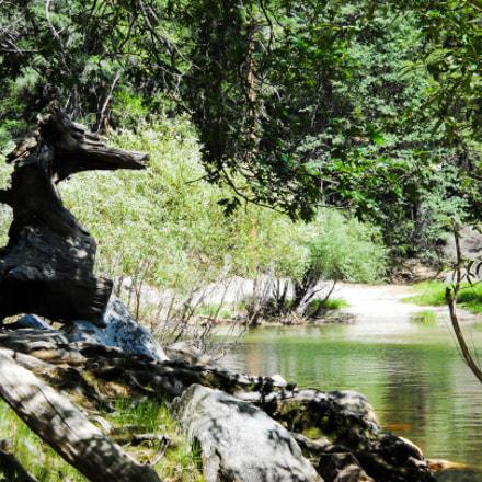 Horse Log, Nikon COOLPIX L24