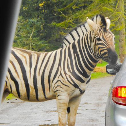 Zebra, Nikon COOLPIX L24