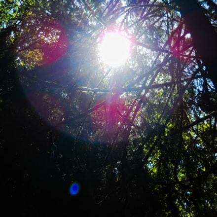 Sunflare, Nikon COOLPIX L24