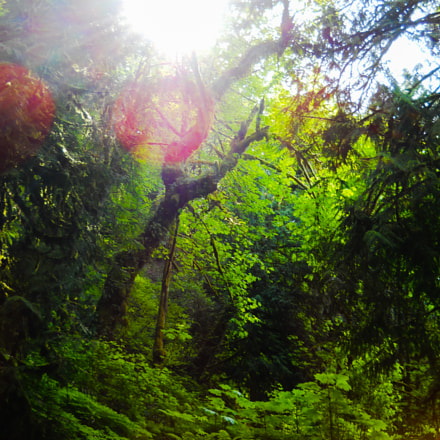 Sun Spinning, Nikon COOLPIX L24