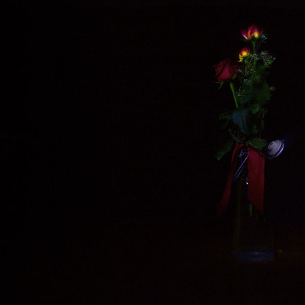 Light painted roses, Canon EOS 100D, Sigma 17-70mm f/2.8-4 DC Macro OS HSM | C