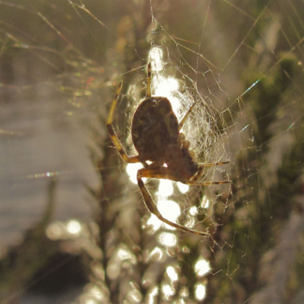 seaside spider villa, Canon POWERSHOT SX600 HS