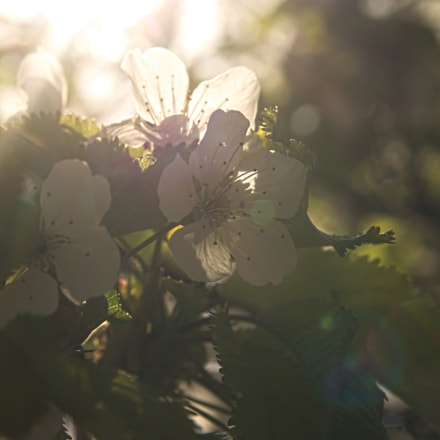 Spring lights, Canon EOS 1100D, Sigma 17-70mm f/2.8-4.5 DC Macro
