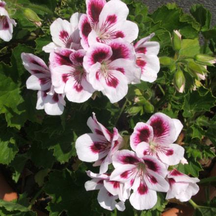 Flowers, Nature is... Amazing, Fujifilm FinePix S5500