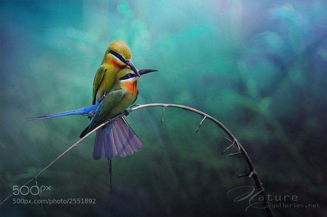 Photograph Couples birds by Sasi - smit on 500px
