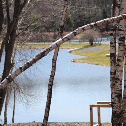 Branch over Lake, Canon EOS REBEL T6, Canon EF 75-300mm f/4-5.6