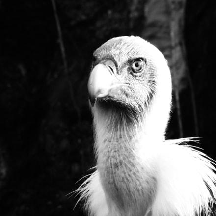 The Vulture, Panasonic DMC-TZ55