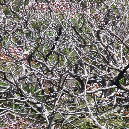 Tree Family..., Canon IXUS 175