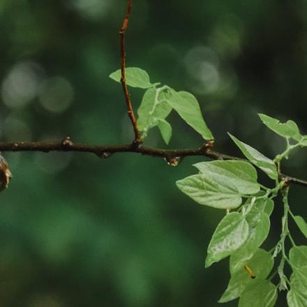 Rainy Day, Nikon COOLPIX L320