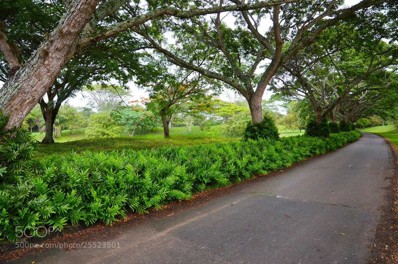 Photograph Path by Manuel Dangond on 500px