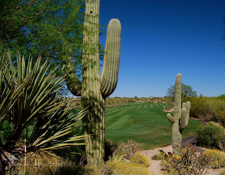 Photograph Saguaro Golf by Manuel Dangond on 500px