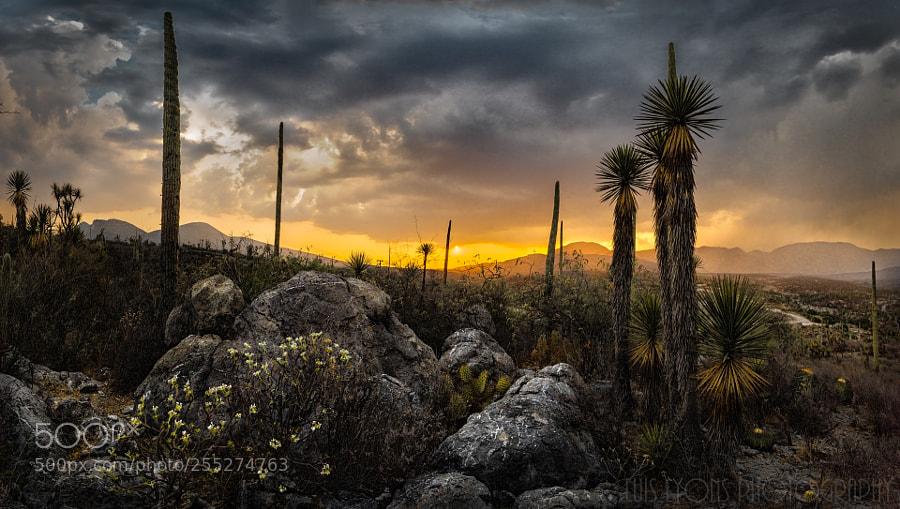 La Mesa Sunset