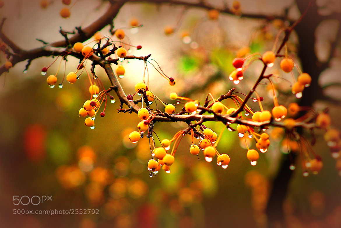 Photograph Berries by Susan Olsen on 500px