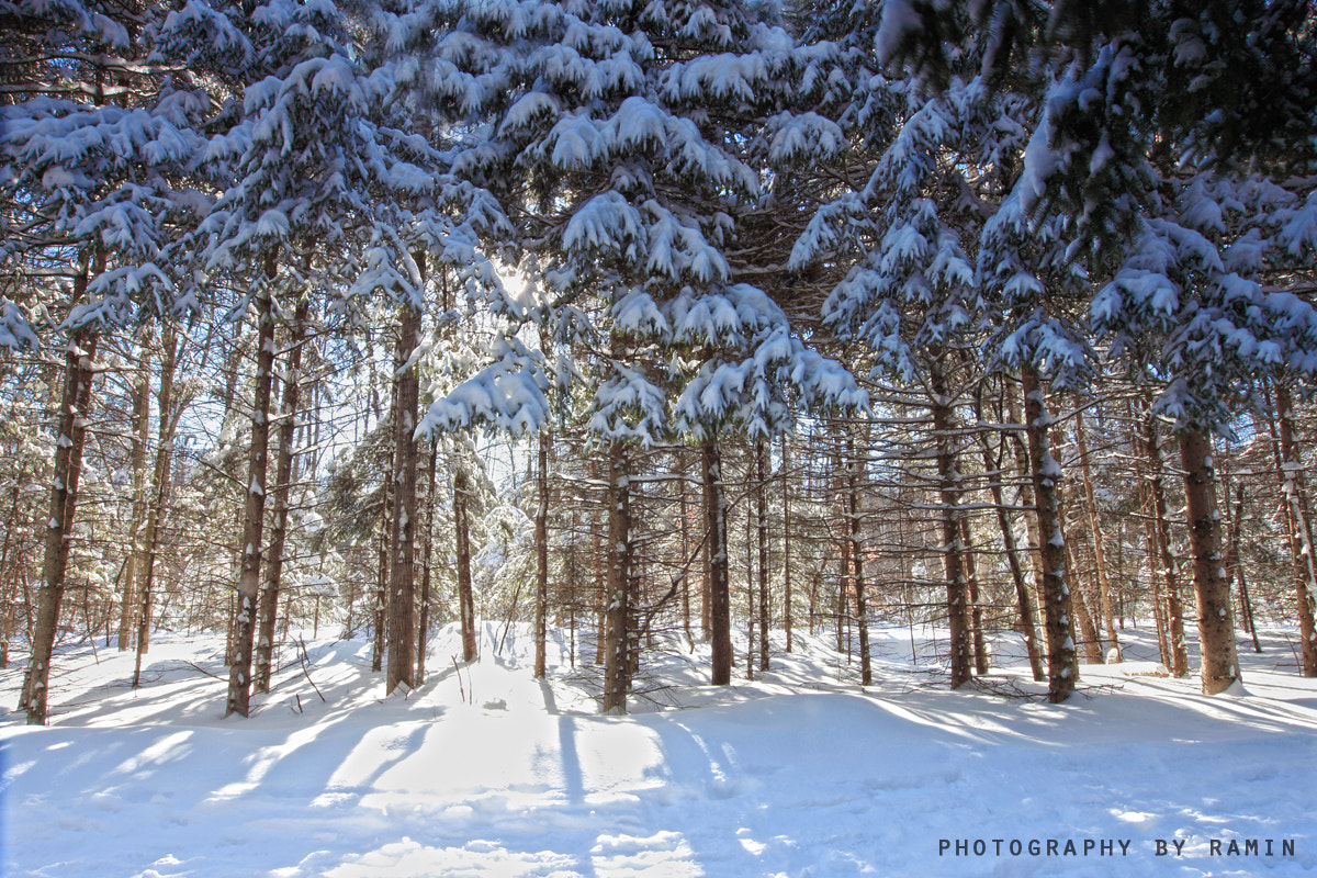 Photograph Ottawa, Winter Wonderland today !!!! by Photography by Ramin  on 500px