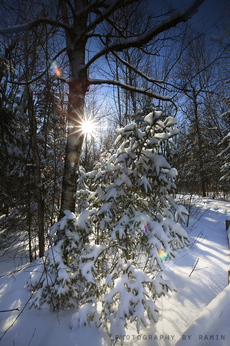 Photograph Ottawa, Winter Wonderland today II by Photography by Ramin  on 500px