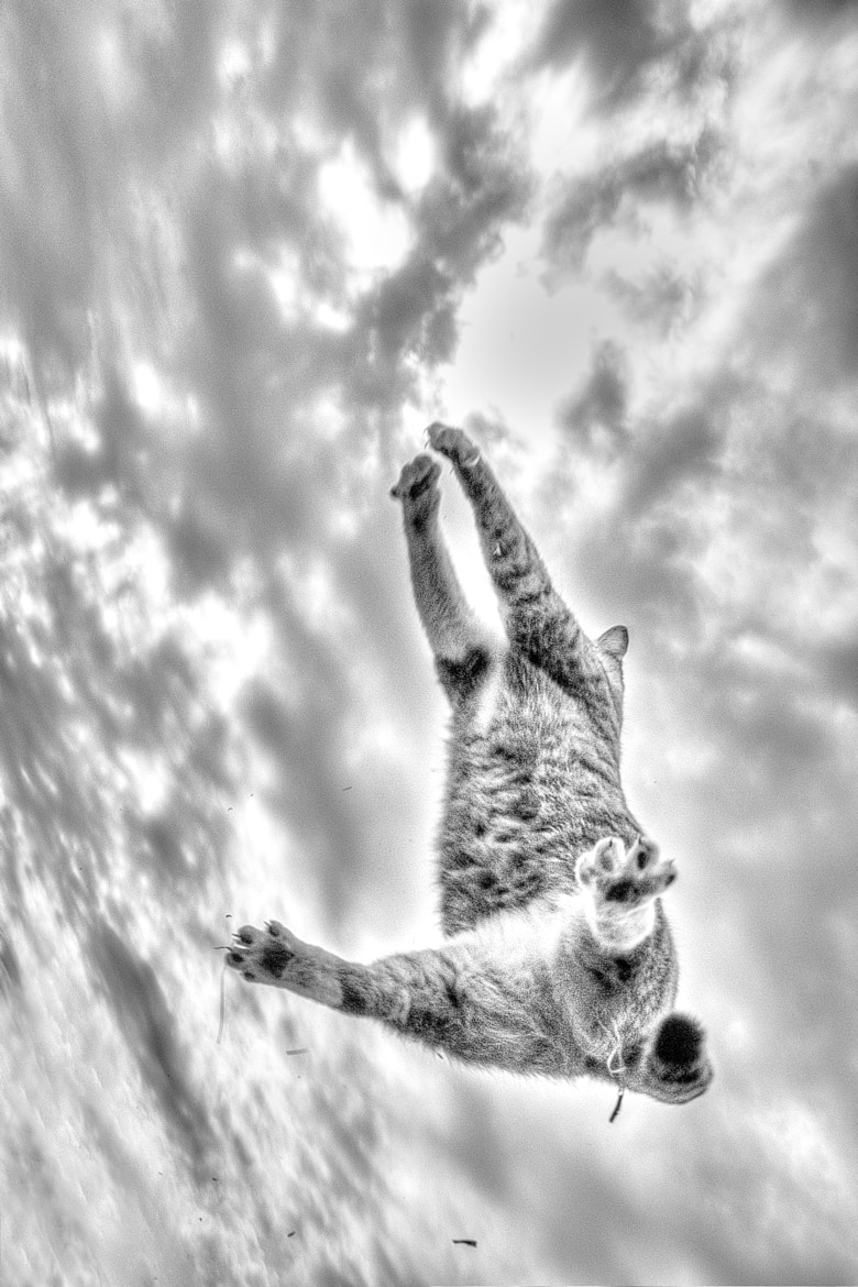 Photograph Rising Cat by Seiji Mamiya on 500px